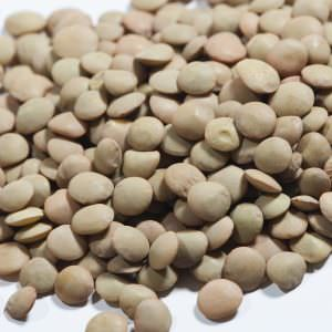 green whole lentils