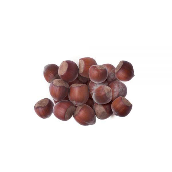 hazelnut kernels inshell